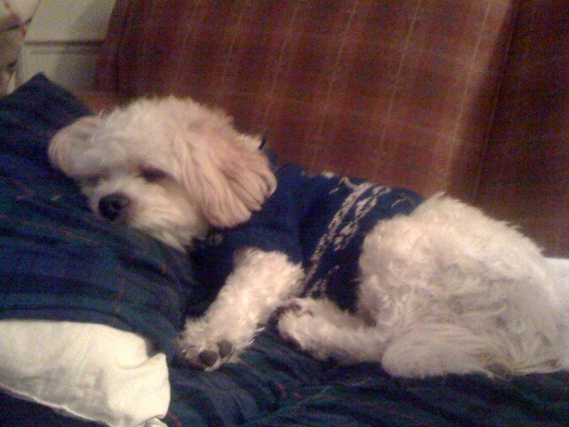 Rocky_xmas_sleeping