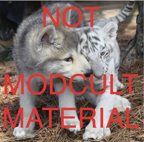 Wolf-nmm