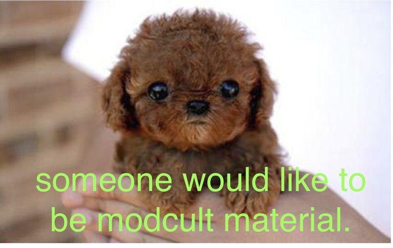 Puppy_modcult