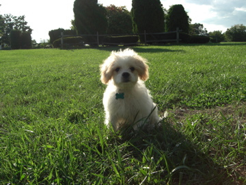 Rocky-grass