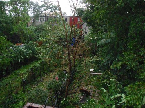 Backyard_damage