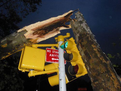 Tree_vs_stoplight